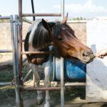 huis met paardenwei